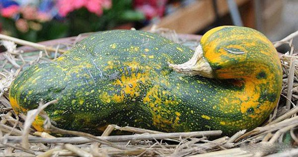 Best Funny Shaped Fruits