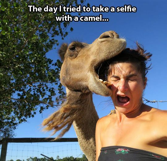 selfie-with-a-camel