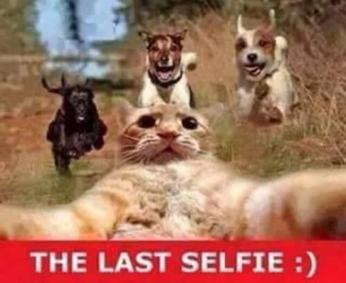 Top 13 Selfie Jokes Images Ever Created | Funny Selfie Jokes