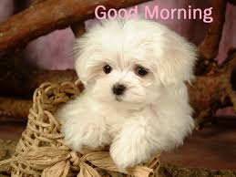 best cute good morning pictures