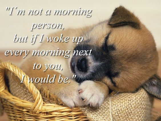 cutest good morning wishes